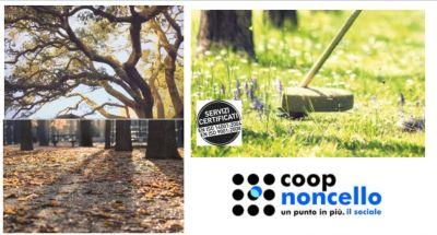offerta potatura alberi arbusti e siepi an occasione servizio di abbattimento alberi pn