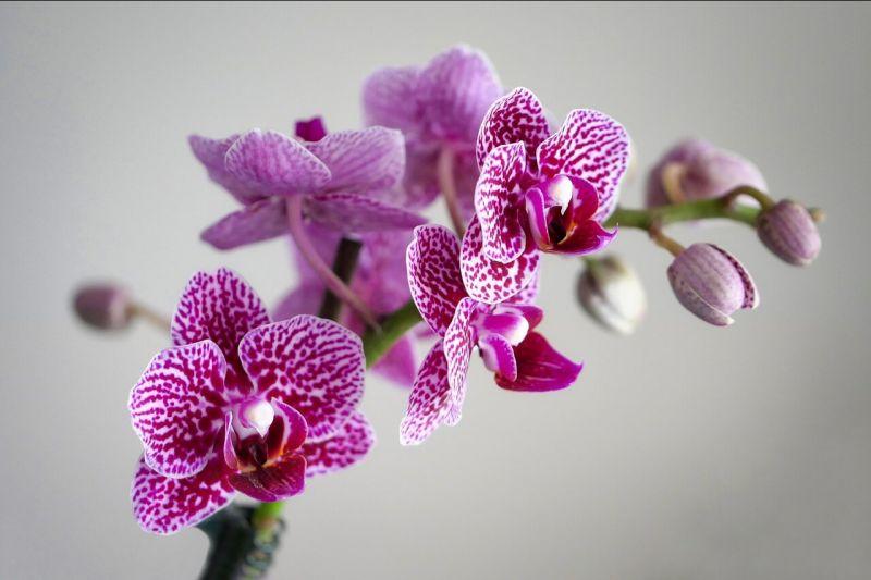 offerta grande assortimento di orchidee camaiore-promozione assortimento orchidee camaiore