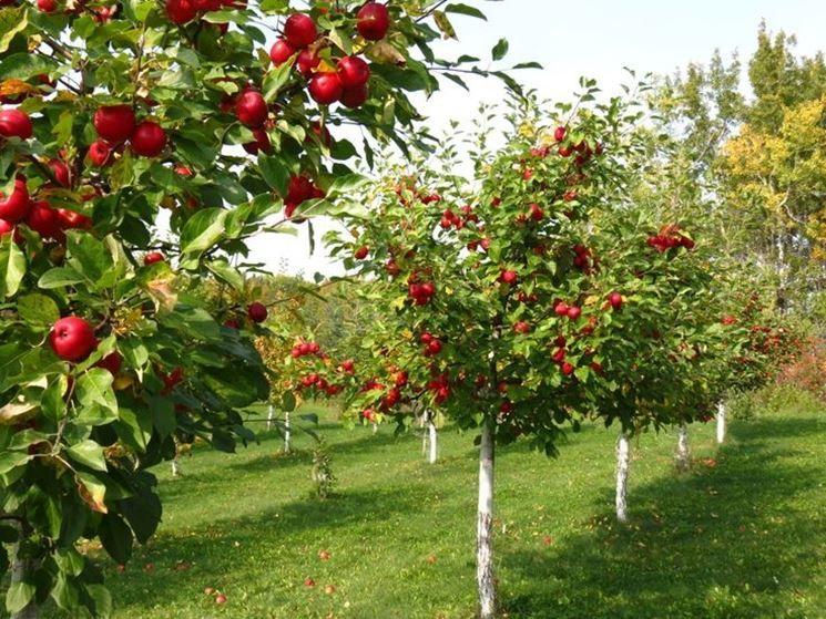 offerta piante da agrumi viareggio-promozione piante da agrumi viareggio