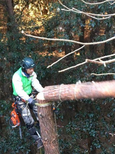 offerta treeclimbing potatura certificata versilia promozione treeclimbing versilia