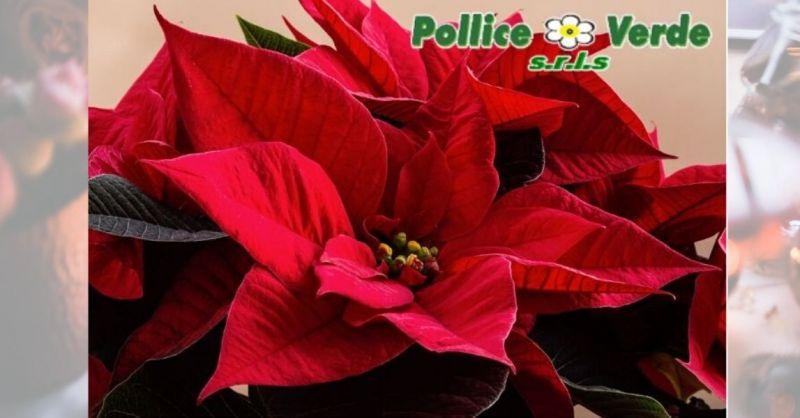 offerta decorazioni e addobbi natalizi casa Lucca - occasioni piante natalizie e centrotavola