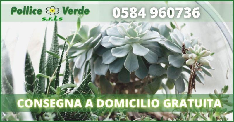POLLICE VERDE - offerta consegna a domicilio piante e fiori Viareggio