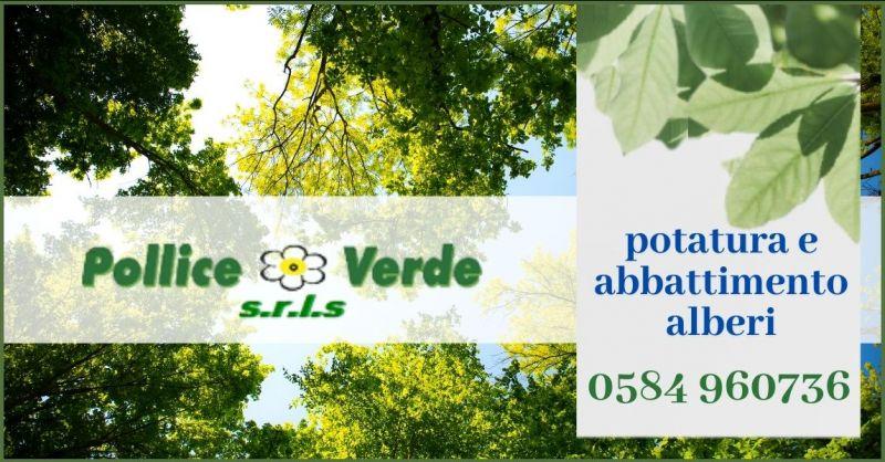 offerta servizio di potatura e abbattimento alberi TREE CLIMBING Versilia - POLLICE VERDE