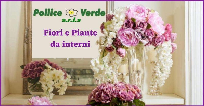 occasione piante da appartamento Lucca e Versilia - POLLICE VERDE
