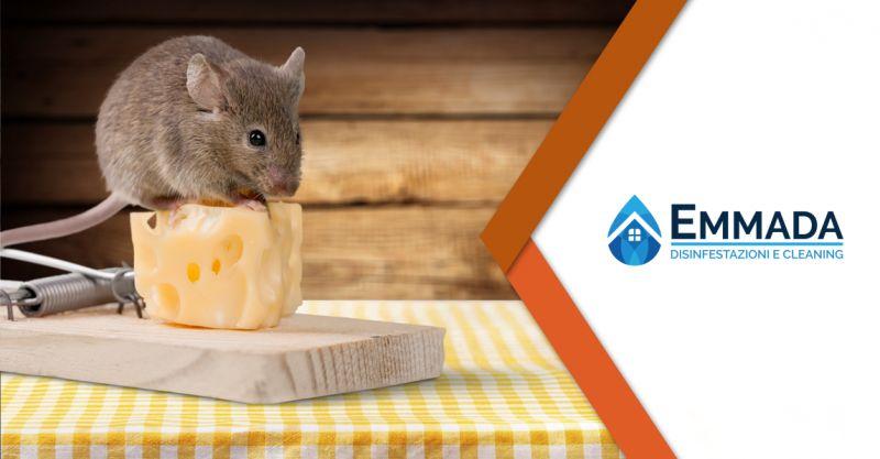 offerta pronto intervento derattizzazione - servizio derattizzazione topi ratti sicilia