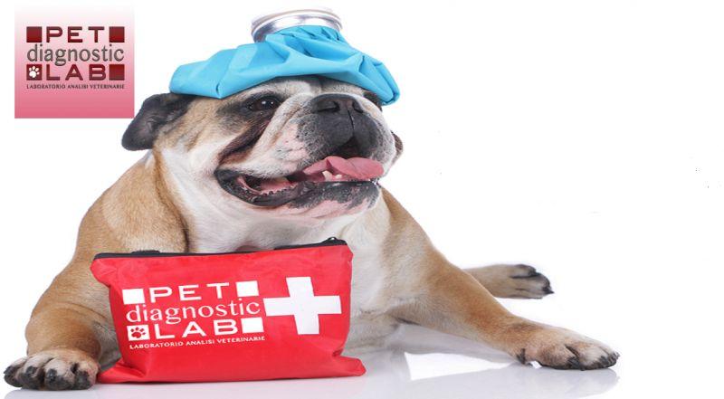 Pet Diagnostic Lab offerta analisi veterinarie - occasione analisi cliniche Catania
