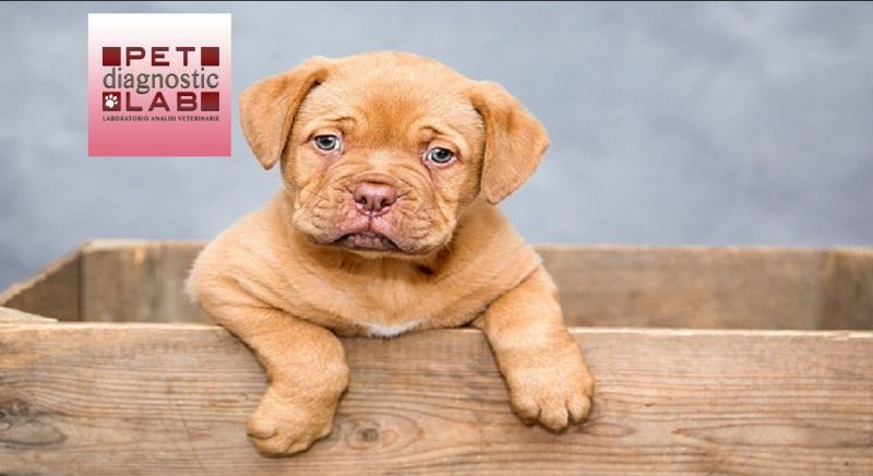 Pet Diagnostic Lab offerta analisi veterinarie - occasione analisi del sangue Catania