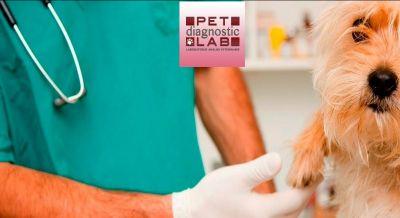 pet diagnosti lab offerta analisi veterinarie occasione laboratorio catania