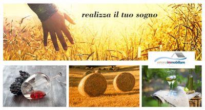 offerta vendesi terreno agricolo con casolare ortona occasione vendita azienda agricola