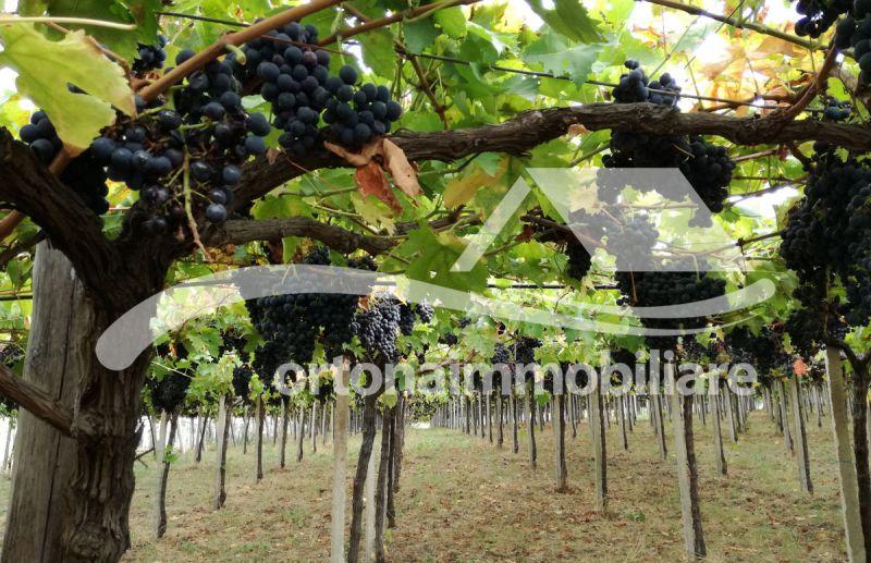 Ortonaimmobiliare - Offerta azienda agricola con terreni a vigneto in zona costiera in Abruzzo