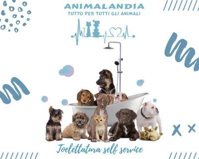animalandia san gavino toelettatura per cani e gatti self service