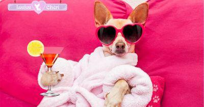 offerta trattamenti per cani spa a torino promozione centro estetico per cani a torino