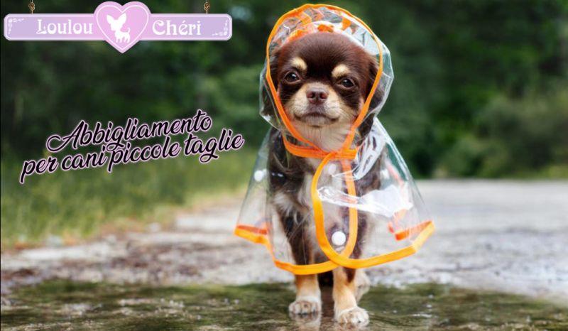Offerta vendita abbigliamento artigianale per cani piccole taglie Torino - Loulou Cheri