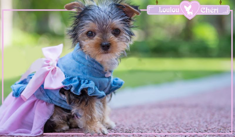 Offerta vendita accessori per cani piccole taglie Torino - abiti eleganti per cani Torino