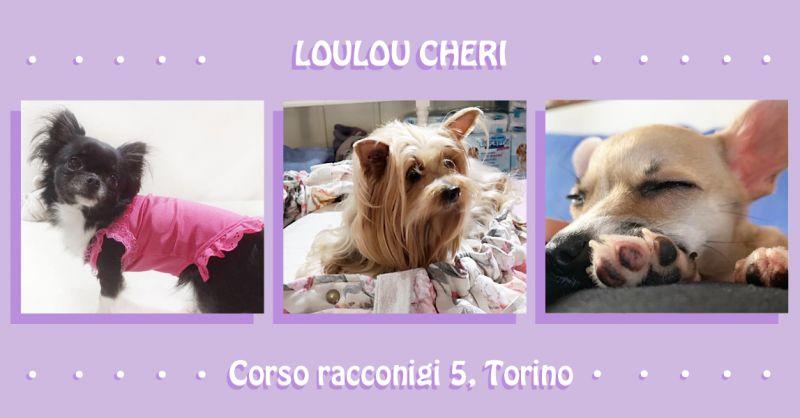 offerta taglio a forbice cani da esposizione Torino - occasione bagni curativi per cani Torino