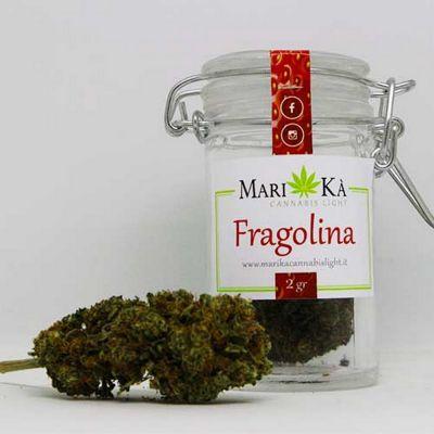 cannabis light fragolina ancona