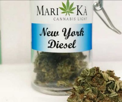 cannabis light ancona new york diesel cannabis light ancona