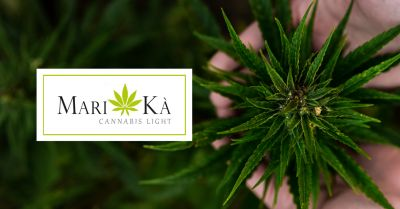 offerta negozio cannabis light ancona occasione prodotti a base di cannabis light ancona
