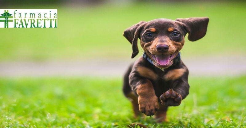 Farmacia Favretti offerta medicinali per animali - occasione articoli veterinari Agordo