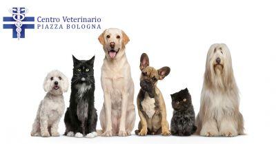 centro veterinario offerta poliambulatorio specialistico oncologia anestesia veterinaria roma