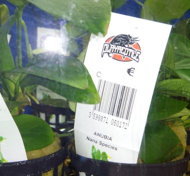 offerta piante da acquario Molfetta Bari negozio animali promozione decorazioni acquari