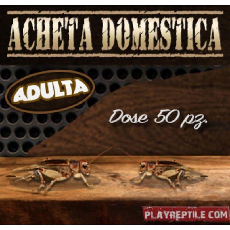 promozione mangime acheta domestica - offerta ACHETA DOMESTICA ADULTA DOSE DA 50 PEZZI