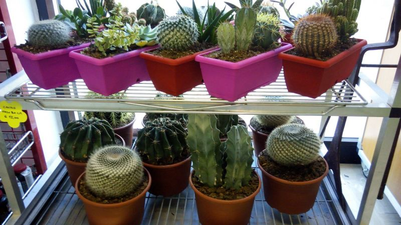 promozione negozio cactus molfetta