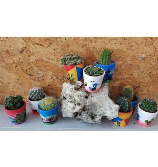 offerta cactus vendita a bari - promozione piante ornamentali cactus a molfetta