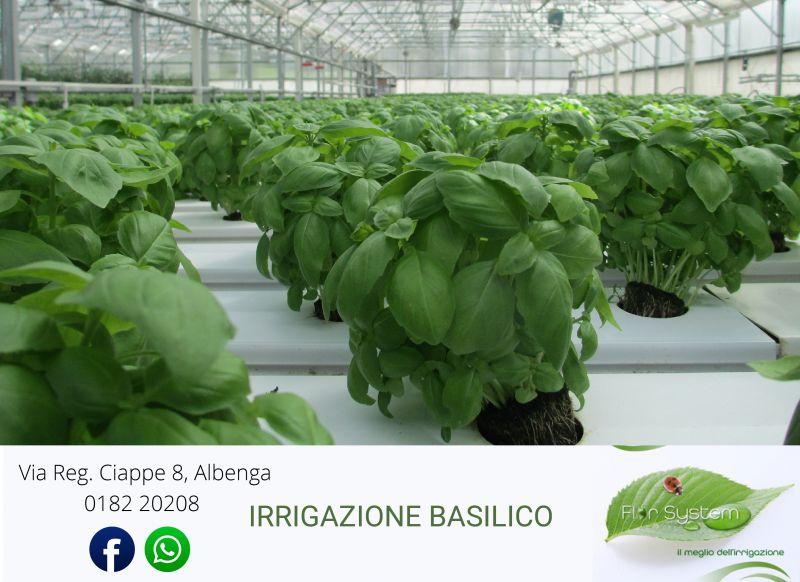 Offerta Impianti Irrigazione Basilico Albenga Savona| Promozione Florsystem Albenga