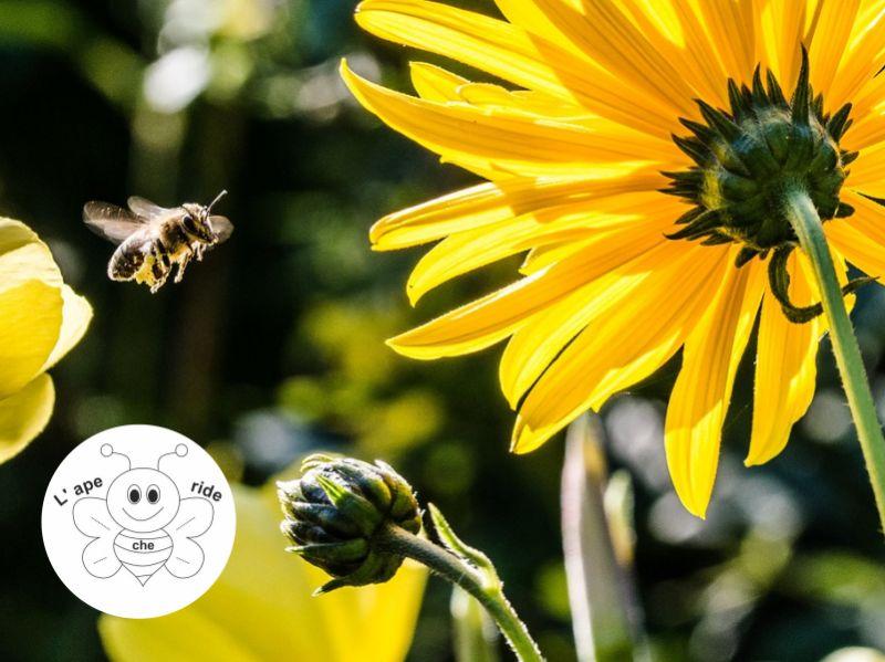 L'APE CHE RIDE DI BIDOJA ELENA offerta attrezzatura apiculture - promozione affumicatore api