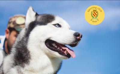 sporting club desio offerta spazio per addestramento cinofilo promo spazio educazione cani