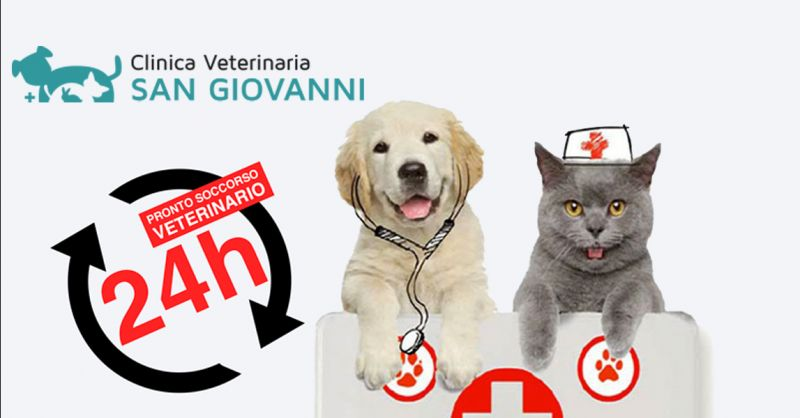 Offerta pronto soccorso Veterinario aperto H24 Roma - Occasione Primo Soccorso Animali Roma
