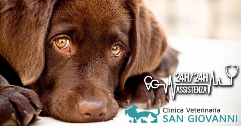 Offerta clinica Oncologica Veterinaria Roma - Occasione centro cure oncologiche animali Roma