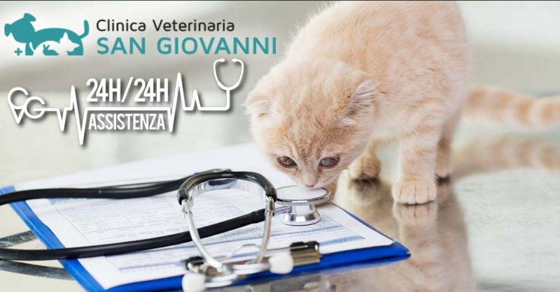 Offerta sterilizzazione animali domestici Roma - Occasione sterilizzazione cane Roma