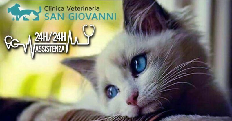 Offerta visite ortopediche specialistiche animali Roma - Occasione Veterinario Ortopedico Roma