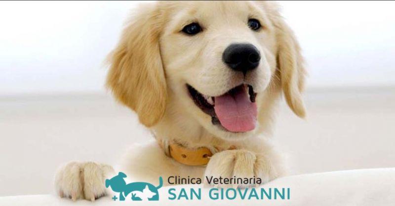 Offerta professionisti oculistica veterinaria Roma - Occasione oculista veterinario Roma