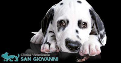 offerta profilassi e prevenzione filaria roma occasione clinica veterinaria roma