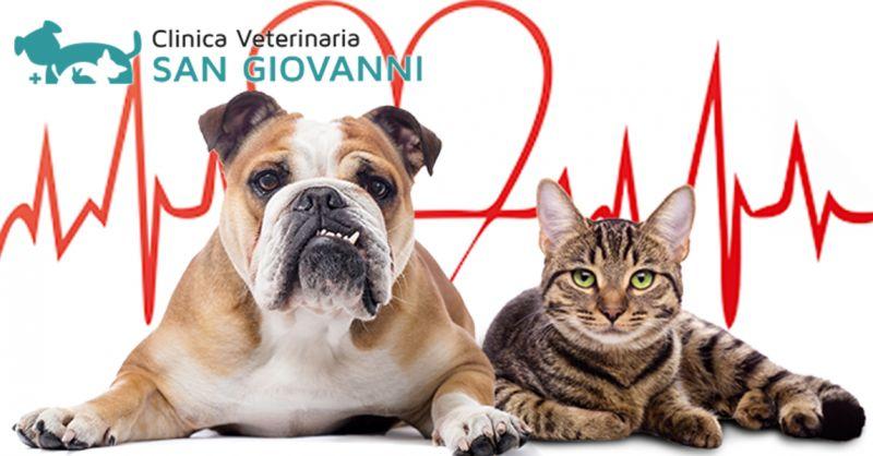 Offerta Cardiologia Cardiochirurgia Veterinaria Roma - Occasione miglior cardiologo veterinaria