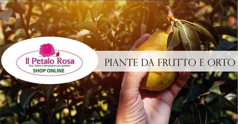 PETALO ROSA BUDONI - offerta produzione e vendita online piante da frutto e orto