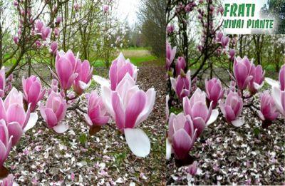 arbusti parma vivaio parma piante parma fiori parma