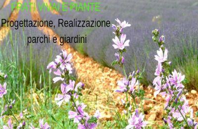 piante aromatiche parma erbe aromatiche parma