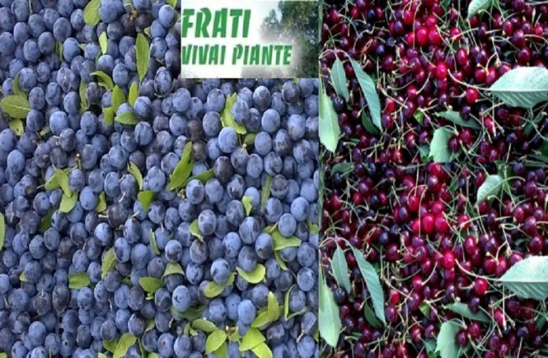 Piante da frutto Parma Frutta fresca Parma