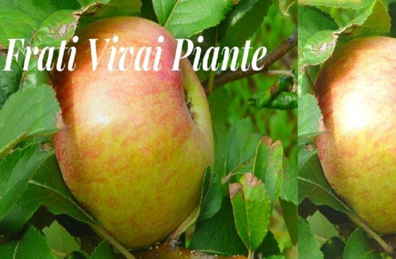Piante da frutto Parma  Piante da frutto per giardino