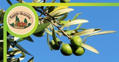 frantoio buzzichini offerta vendita olio extravergine di oliva citta di castello