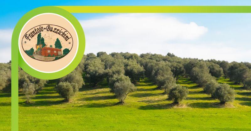 FRANTOIO BUZZICHINI - offerta vendita olio extravergine di oliva san giustino