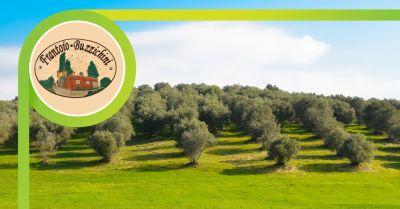 frantoio buzzichini offerta vendita olio extravergine di oliva san giustino