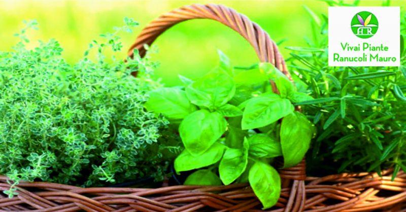 Ranucoli Vivai offerta manutenzione giardini - occasione lavori giardinaggio