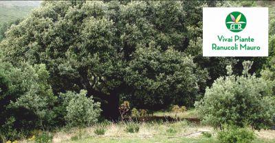 ranucoli piante offerta potatura alberi ad alto fusto occasione potatura siepi