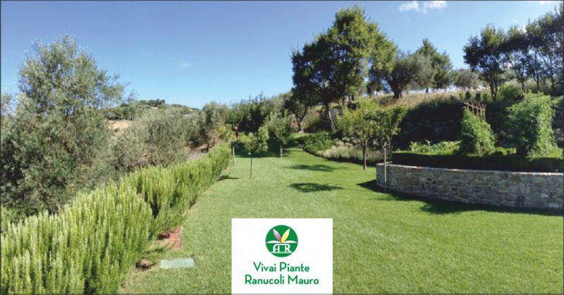 ranucoli vivai offerta vivai - occasione realizzazione impianti d'irrigazione perugia