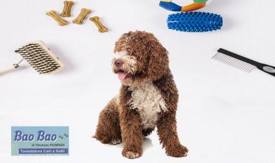 offerta toelettatura professionale foggia promozione toeletta per cane e gatto foggia
